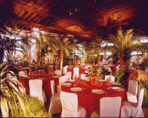 78 Best Images About Caribbean Party Ideas And Decorations: Event Props And Plants Hire