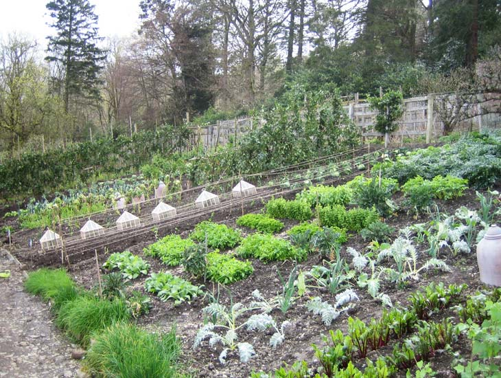 45 tonnes of topsoil, specially grown vegetables, a few period props and silk flowers were used to create this look of a period summer vegetable garden, in March.
