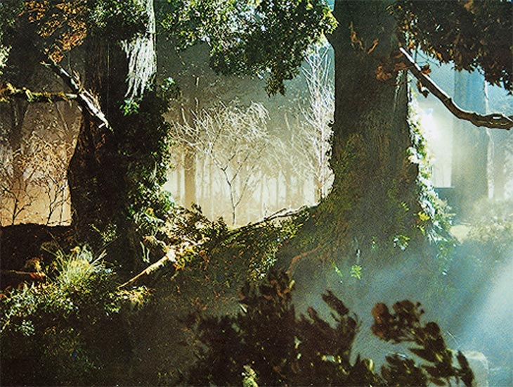 Giant artificial tree trunks, cut trees & branches and moss & ferns were used to create this woodland landscape for a music video.